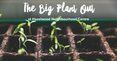 Weekly Growing Sessions at Hazelwood Neighbourhood Centre