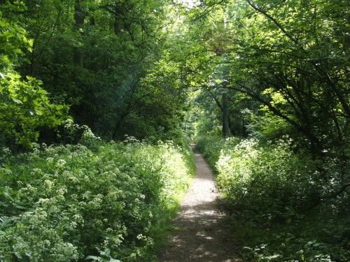 Corby's Woodland